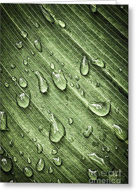 Dew Greeting Cards - Green leaf background with raindrops Greeting Card by Elena Elisseeva