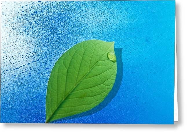 Green Leafs Greeting Cards - Green Leaf Floating Above Streaked Greeting Card by Panoramic Images