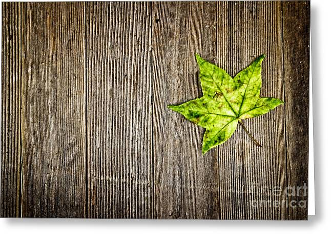 Office Space Photographs Greeting Cards - Green Leaf on Wood Greeting Card by Colleen Kammerer