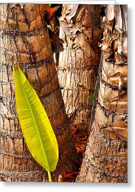 Leaves Photographs Greeting Cards - Green Leaf Greeting Card by Steven Ainsworth