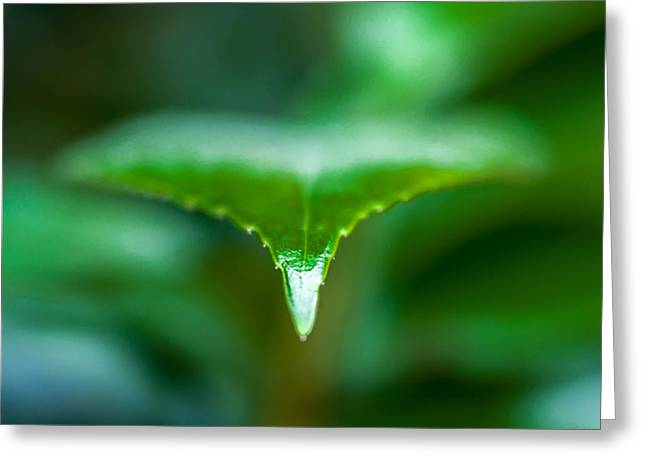 Todd Soderstrom Greeting Cards - Green Leaf Greeting Card by Todd Soderstrom