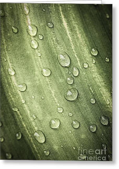 Green Leaf With Raindrops Greeting Card by Elena Elisseeva