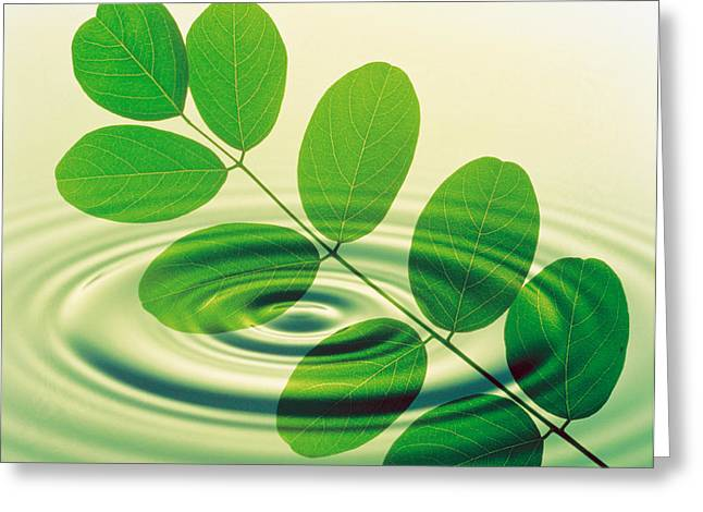 Green Leafs Greeting Cards - Green Leafy Branch Superimposed Greeting Card by Panoramic Images