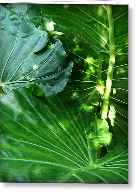 Sunset Greeting Cards Greeting Cards - Green Leaves 3 Greeting Card by Carol Toepke