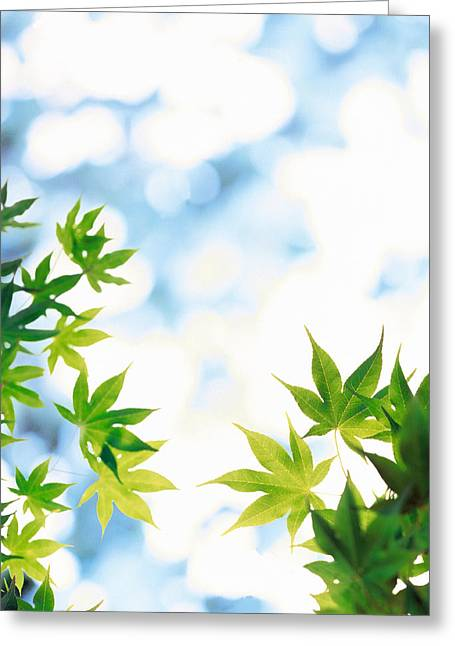 Mottled Greeting Cards - Green Leaves On Mottled Cloudy Sky Greeting Card by Panoramic Images