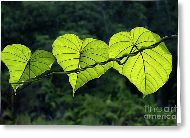 William Voon Greeting Cards - Green Leaves Greeting Card by William Voon