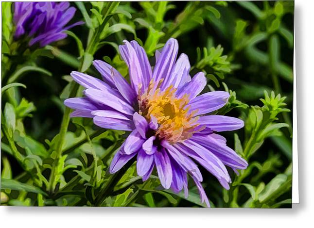 Green Day Greeting Cards - Green lilac aster Greeting Card by Leif Sohlman