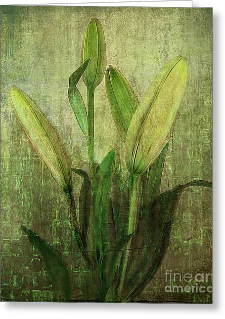 Lilies Pyrography Greeting Cards - Green Lilies Greeting Card by Linda Veit