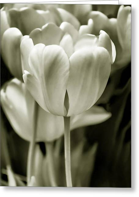 Olive Green Greeting Cards - Olive Green Luminous Tulip Flowers Greeting Card by Jennie Marie Schell