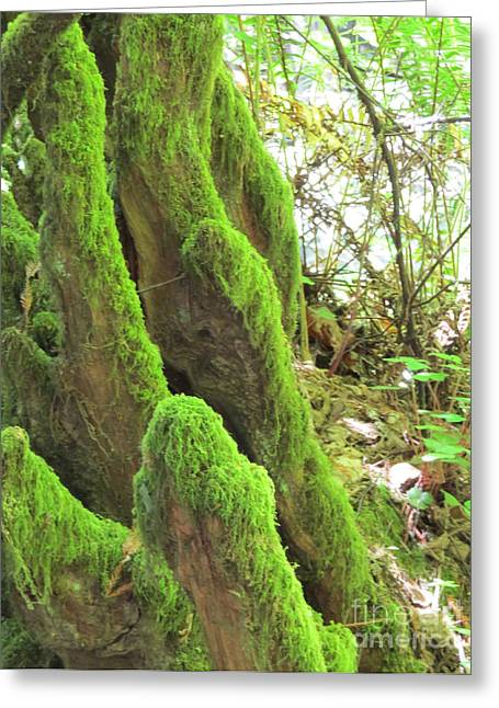 San Francisco Famous Photographers Greeting Cards - Green Moss Greeting Card by Mary Mikawoz