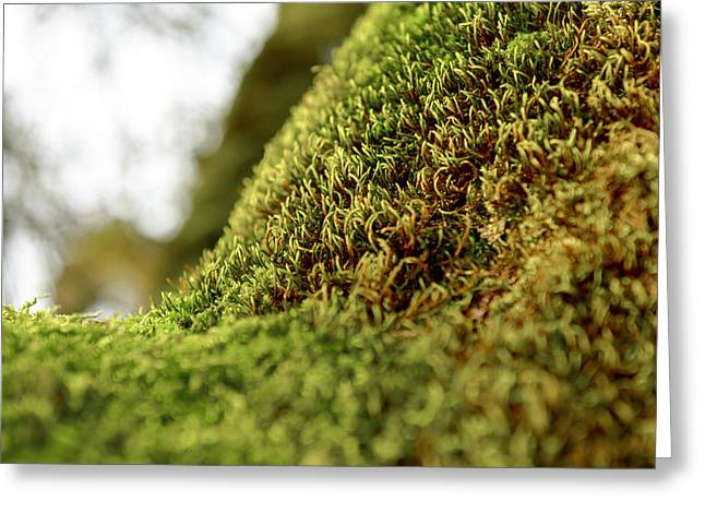 Moss Green Pyrography Greeting Cards - Green moss on tree trunk Greeting Card by Oliver Sved