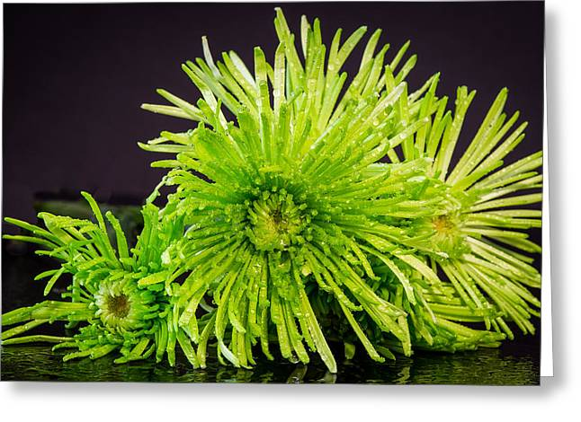 Gold Lime Green Greeting Cards - Green on Black Greeting Card by Betsy A Davis
