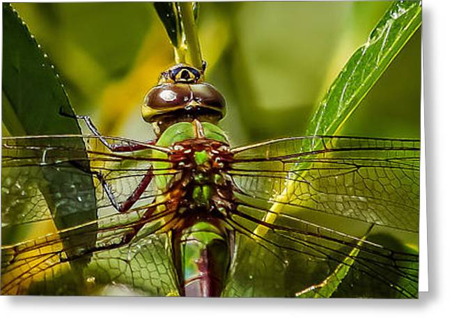 Dragonflies Glass Art Greeting Cards - Green On Green Greeting Card by Mitch Shindelbower