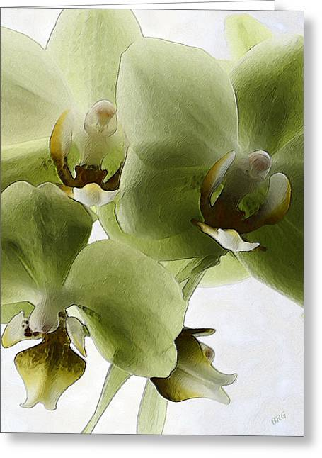 Green Orchid Greeting Card by Ben and Raisa Gertsberg