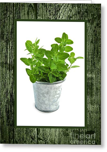Sprigs Greeting Cards - Green oregano herb in small pot Greeting Card by Elena Elisseeva