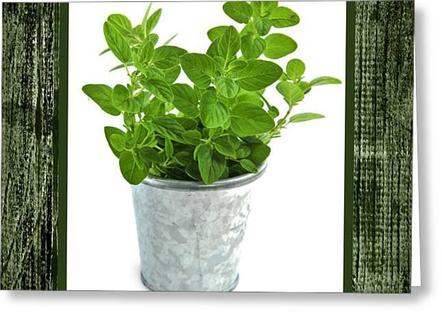 Green oregano herb in small pot Greeting Card by Elena Elisseeva