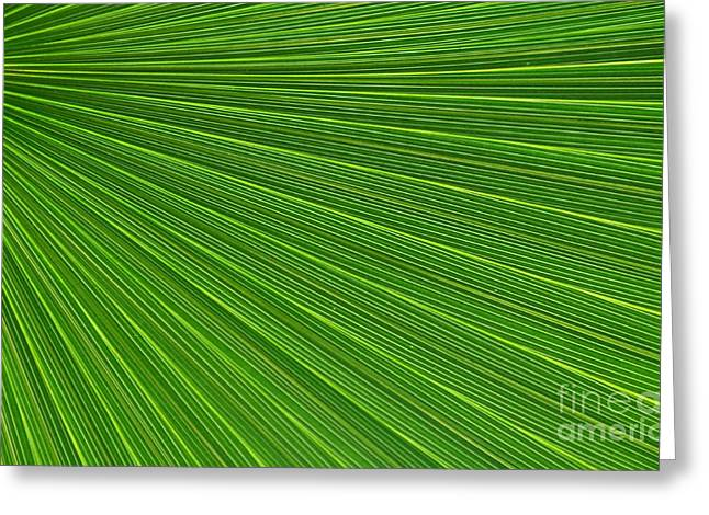 Green Palm Abstract Greeting Card by Kathleen Struckle