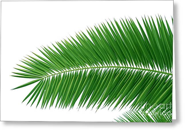 Green Foliage Pyrography Greeting Cards - Green Palms Greeting Card by Boon Mee