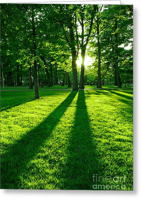 Sun Ray Greeting Cards - Green park Greeting Card by Elena Elisseeva