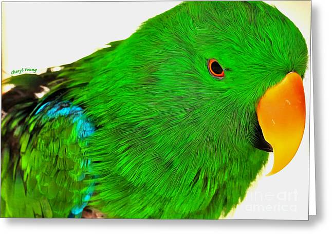Smart Greeting Cards - Green Parrot Greeting Card by Cheryl Young