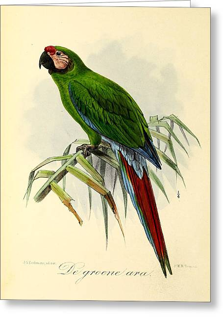 Color Green Greeting Cards - Green Parrot Greeting Card by J G Keulemans