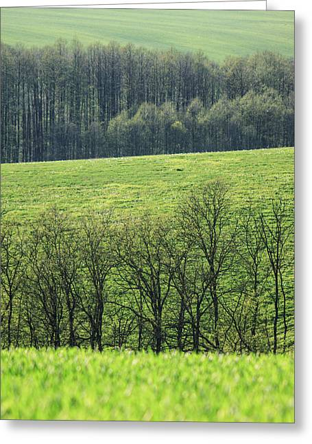 Layered Greeting Cards - Green peace Greeting Card by Davorin Mance