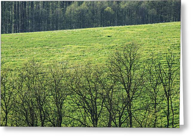 Green peace Greeting Card by Davorin Mance