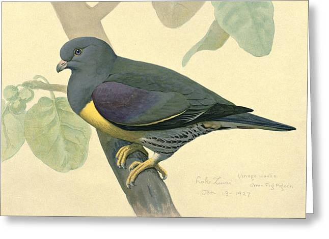 Agassiz Greeting Cards - Green Pigeon Greeting Card by Louis Agassiz Fuertes