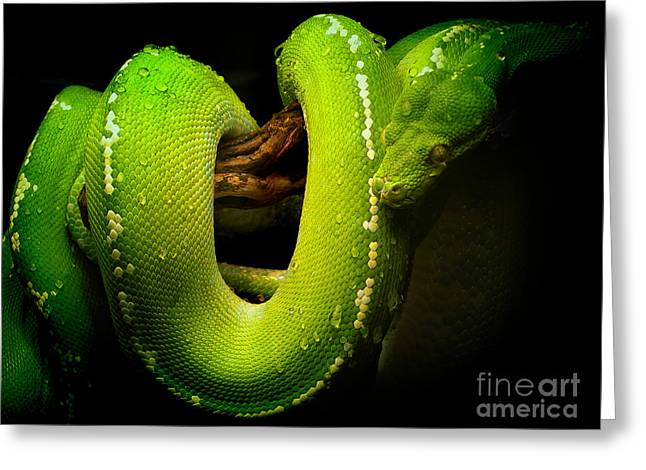 Pictures Of Cats Greeting Cards - Green Python Greeting Card by Skip Willits