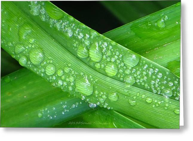 Revive Greeting Cards - Green raindrops Greeting Card by Sonali Gangane