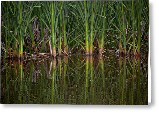 Deep Greens Greeting Cards - Green Reflections Greeting Card by Linda Unger
