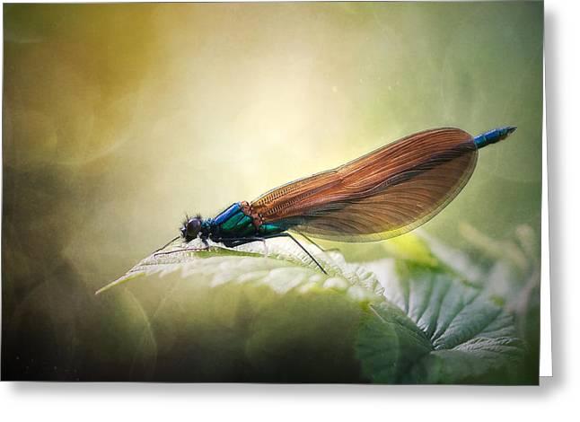 Green Greeting Card by Rikard Olsson