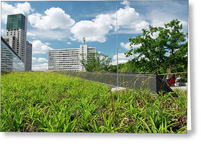 Green Roof Greeting Card by Louise Murray