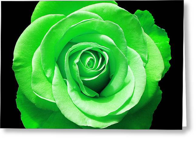 Pretty Flowers Greeting Cards - Green Rose Greeting Card by Aimee L Maher Photography and Art