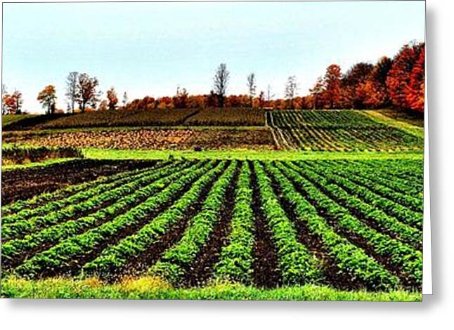 Alga Greeting Cards - Green Row Surprise - Canada Greeting Card by Jeremy Hall