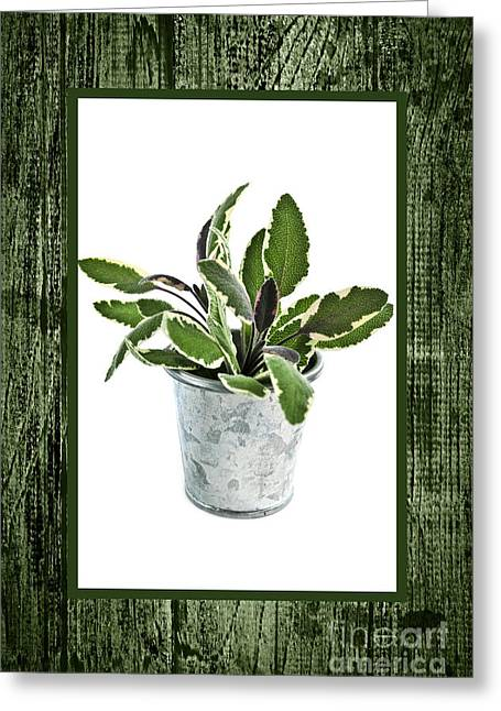 Sprig Greeting Cards - Green sage herb in small pot Greeting Card by Elena Elisseeva