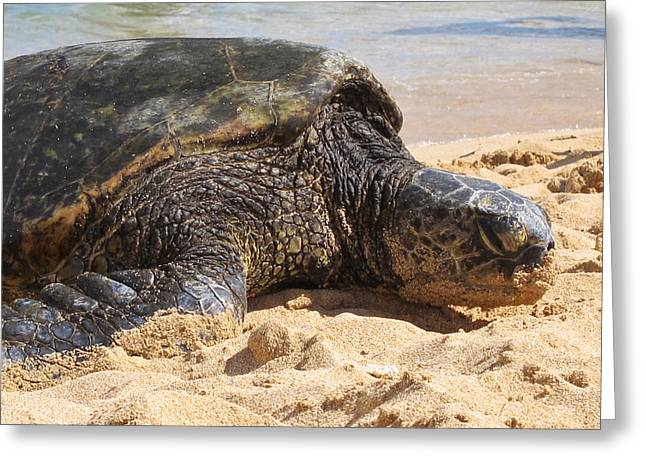Green Sea Turtle Greeting Cards - Green Sea Turtle 2 - Kauai Greeting Card by Shane Kelly