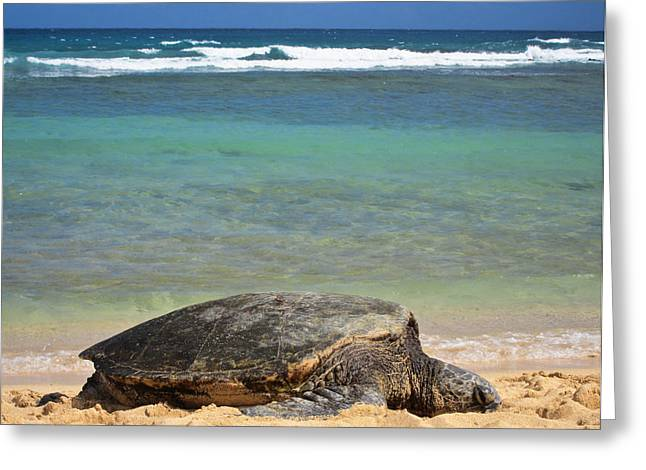 Green Sea Turtle Greeting Cards - Green Sea Turtle - Kauai Greeting Card by Shane Kelly