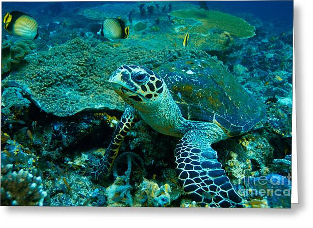 Green Sea Turtle Greeting Card by Manfred Bail