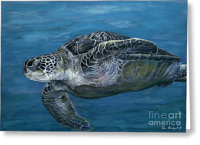 Green Sea Turtle Paintings Greeting Cards - Green Sea Turtle Greeting Card by Tom Blodgett Jr