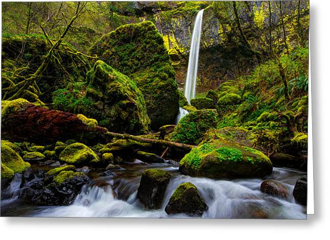 Moss Green Greeting Cards - Green Seasons Greeting Card by Chad Dutson