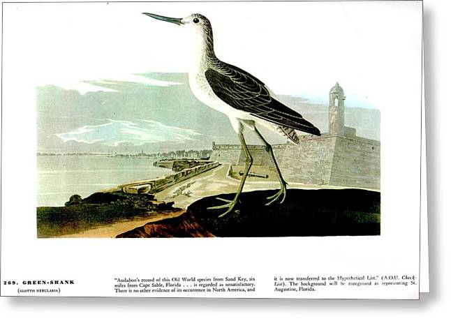 Louisiana Heron Greeting Cards - Green Shank Greeting Card by Celestial Images