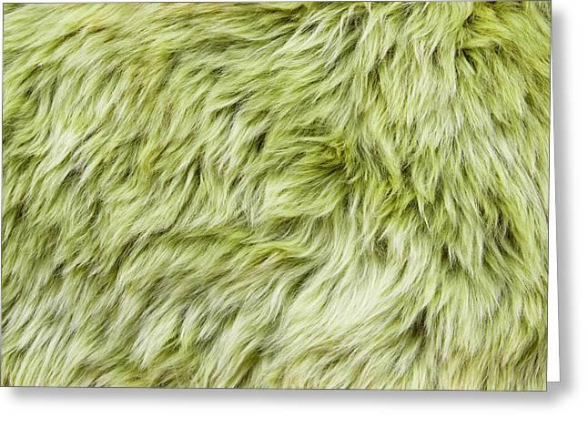 Mink Greeting Cards - Green sheepskin Greeting Card by Tom Gowanlock