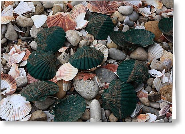 Shell Fish Greeting Cards - Green Shells Greeting Card by Aidan Moran