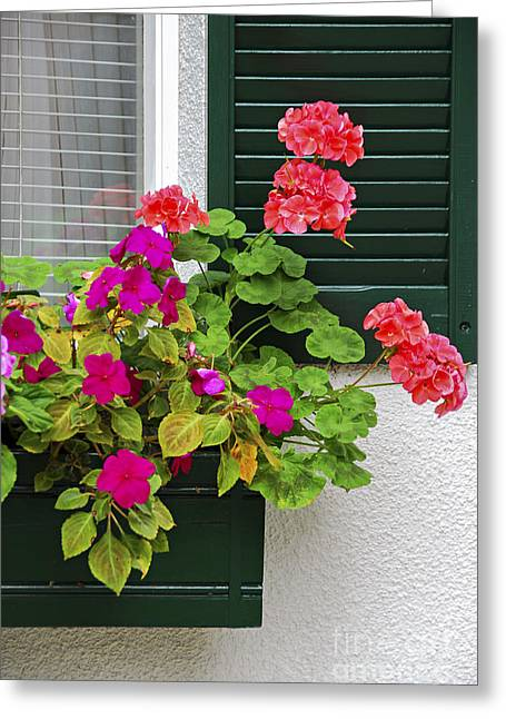 Begonias Greeting Cards - Green shutters Greeting Card by Elena Elisseeva