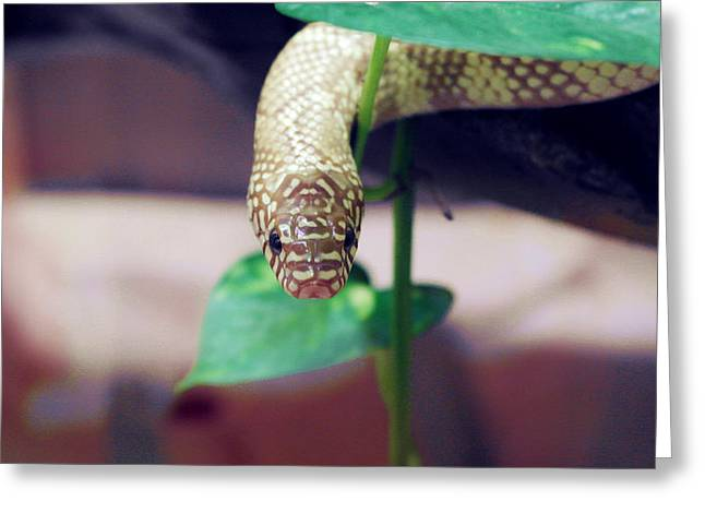 Snake Greeting Cards - Green Snake Greeting Card by Francis Tan