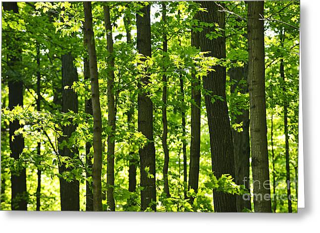 Sunlit Greeting Cards - Green spring forest Greeting Card by Elena Elisseeva