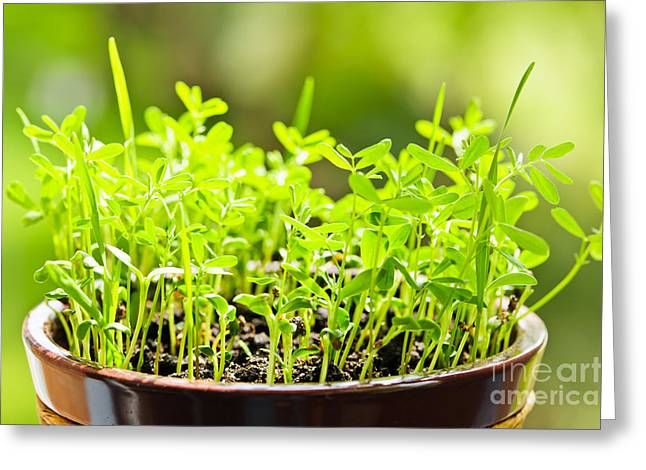 Potted Plants Greeting Cards - Green spring seedlings Greeting Card by Elena Elisseeva