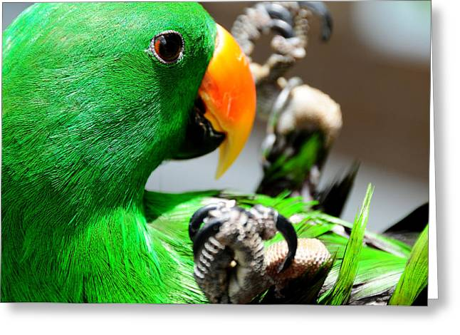 Yellow Beak Greeting Cards - Green Star Peppi. Game Starting Greeting Card by Jenny Rainbow