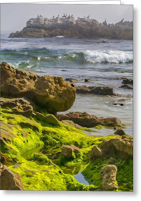 Green Tide Pools And Pelicans Greeting Card by Scott Campbell